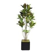 "Laura Ashley 78"" Croton Tree With Multiple Trunks in 14"" Fiberstone Planter, Black/Gray"