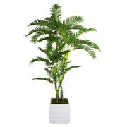 "Laura Ashley 78"" Palm Tree in 14"" Fiberstone Planter, Black/Gray"