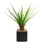 "Laura Ashley 50"" Agave Plant With Cocoa Skin in 14"" Fiberstone Planter, Black/Gray"