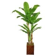 "Laura Ashley 81"" Banana Tree With Real Touch Leaves in 13"" Fiberstone Planter"
