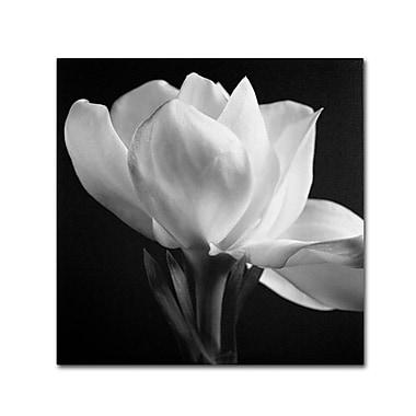Trademark Fine Art 'Gardenia' 24