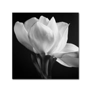 "Trademark Fine Art 'Gardenia' 35"" x 35"" Canvas Art"