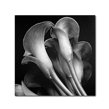Trademark Fine Art 'Lillies' 14