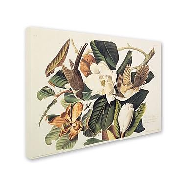 Trademark Fine Art 'Black-Billed Cuckoo' 22