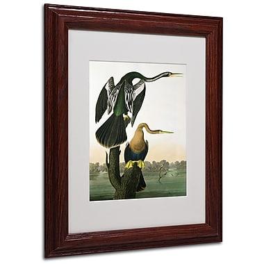 Trademark Fine Art 'Black-Billed Darter' 11