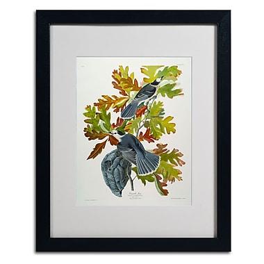 Trademark Fine Art 'Canada Jay' 16