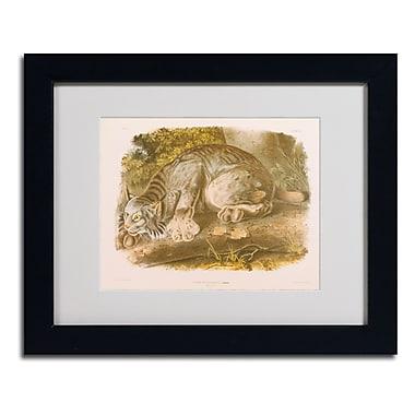 Trademark Fine Art 'Canada Lynx'