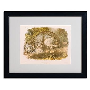 Trademark Fine Art 'Canada Lynx' 16