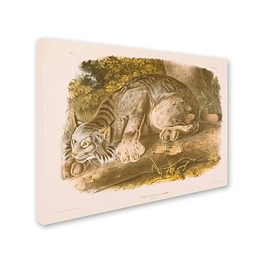 Trademark Fine Art 'Canada Lynx' 35