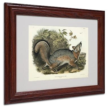 Trademark Fine Art 'Canis Virginianus' 11