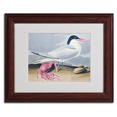 Trademark Fine Art 'Cayenne Tern' 11