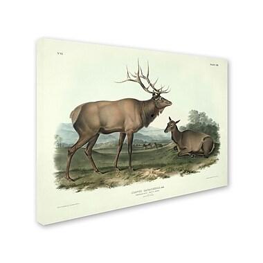 Trademark Fine Art 'Cervus Canadensis' 35