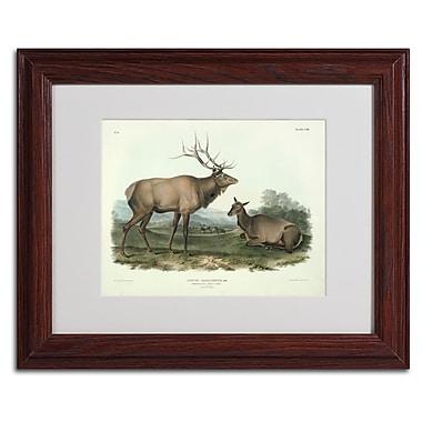 Trademark Fine Art 'Cervus Canadensis' 11