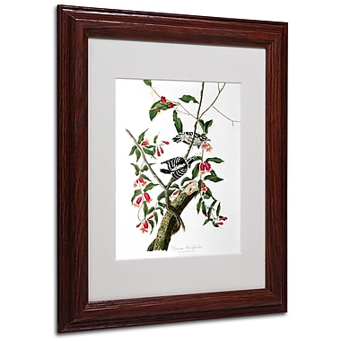 Trademark Fine Art 'Downy Woodpecker' 11
