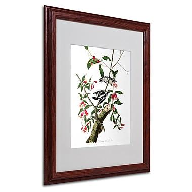 Trademark Fine Art 'Downy Woodpecker' 16