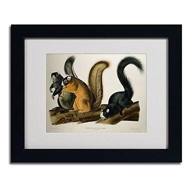 Trademark Fine Art 'Fox Squirrel'