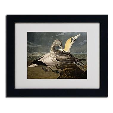Trademark Fine Art 'Gannets'