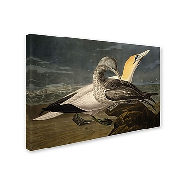 Trademark Fine Art 'Gannets' 30