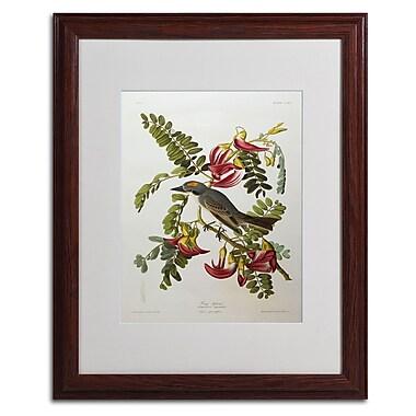Trademark Fine Art 'Gray Tyrant #44; Gray Kingbird' 16