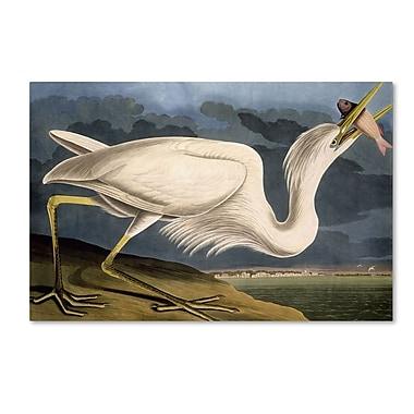 Trademark Fine Art 'Great White Heron' 16