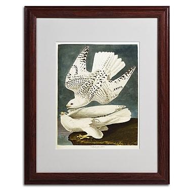 Trademark Fine Art 'Iceland or Jer Falcon' 16