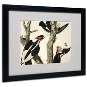 "Trademark Fine Art 'Ivory-Billed Woodpecker' 16"" x 20"" Black Frame Art"
