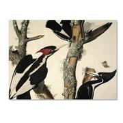 Trademark Fine Art 'Ivory-Billed Woodpecker' 35 x 47 Canvas Art