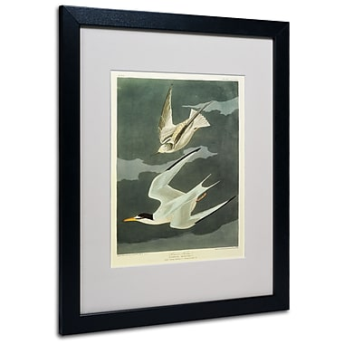 Trademark Fine Art 'Lesser Tern #44; Little Tern' 16