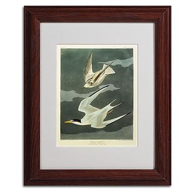 Trademark Fine Art 'Lesser Tern #44; Little Tern' 11