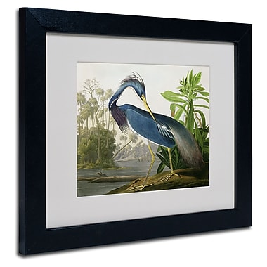 Trademark Fine Art 'Louisiana Heron' 11