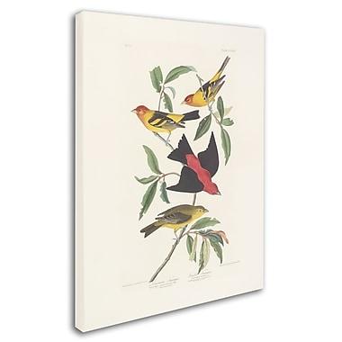 Trademark Fine Art 'Louisiana Tanager' 14
