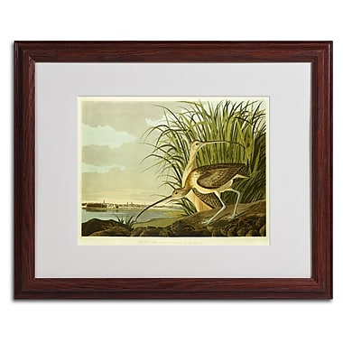 Trademark Fine Art 'Long Billed Curlew' 16