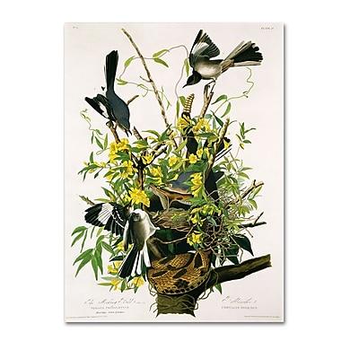 Trademark Fine Art 'Mocking Birds and Snake II' 14