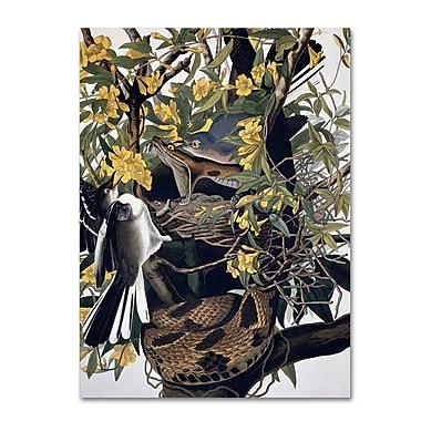 Trademark Fine Art 'Mocking Birds and Snake' 35