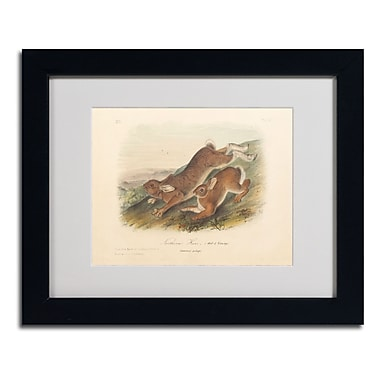 Trademark Fine Art 'Northern Hare' 11