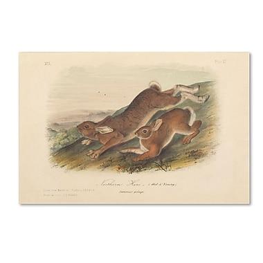 Trademark Fine Art 'Northern Hare' 16