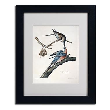 Trademark Fine Art 'Passenger Pigeon' 11