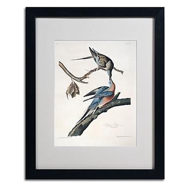 Trademark Fine Art 'Passenger Pigeon' 16