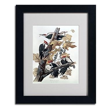 Trademark Fine Art 'Pileated Woodpeckers'