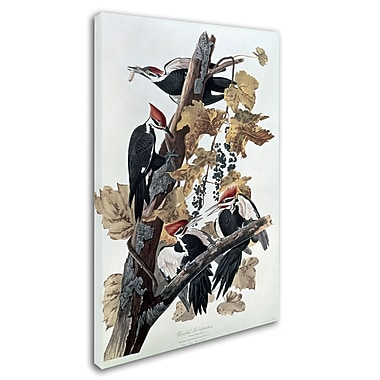 Trademark Fine Art 'Pileated Woodpeckers' 30