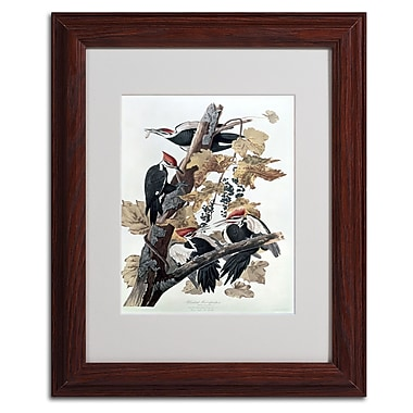 Trademark Fine Art 'Pileated Woodpeckers' 11