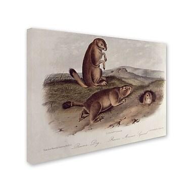 Trademark Fine Art 'Prairie Dog' 35