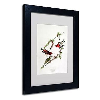 Trademark Fine Art 'Purple Finch' 11