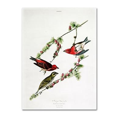Trademark Fine Art 'Purple Finch' 18