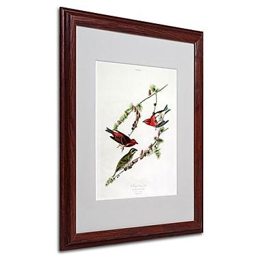 Trademark Fine Art 'Purple Finch' 16