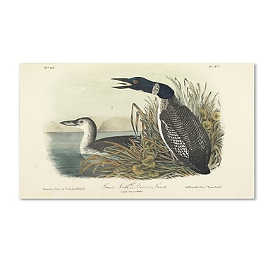 Trademark Fine Art 'Great North Diver Loon' 30