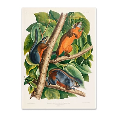 Trademark Fine Art 'Red-Bellied Squirrel' 26