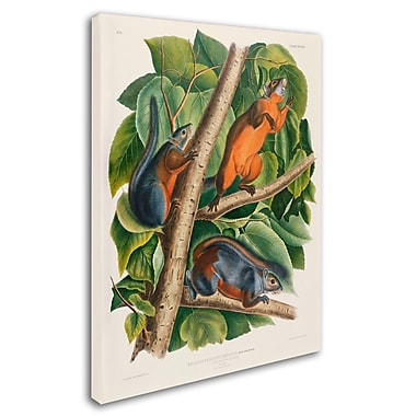 Trademark Fine Art 'Red-Bellied Squirrel' 14