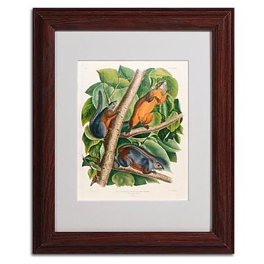 Trademark Fine Art 'Red-Bellied Squirrel' 11