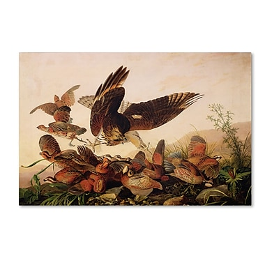 Trademark Fine Art 'Red-Shouldered Hawk' 30